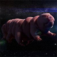 """Con người sẽ bị lai tạo với """"quái vật bất tử"""" tardigrade?"""