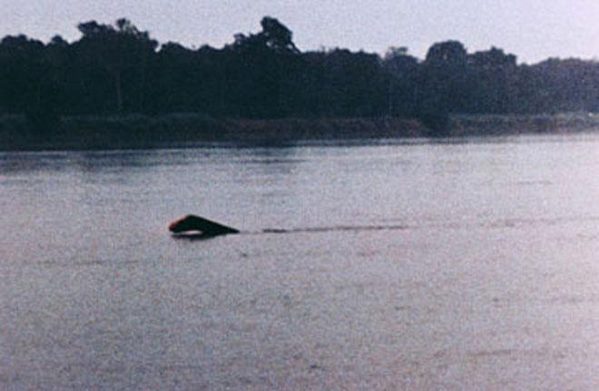 Đến nay, quái vật sông Congo vẫn là một điều bí ẩn.