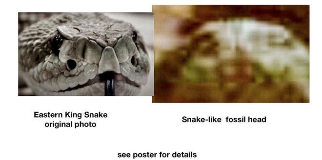 Một tấm ảnh chụp trên sao Hỏa được so sánh với đầu một con rắn.