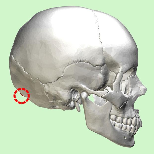 Các mấu xương này có kết cấu giống như những chiếc sừng, dù không phải sừng.