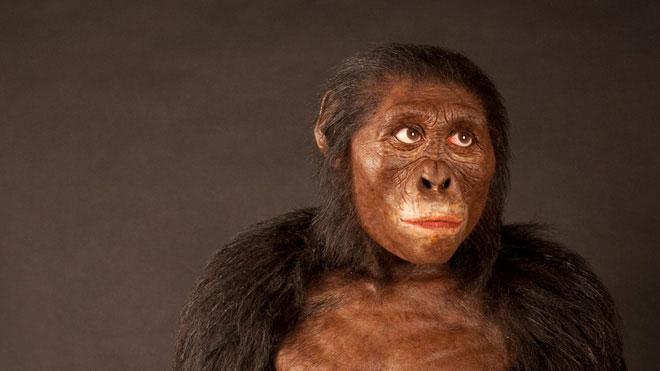 Lucy - vượn người Australopithecus - tổ tiên hơn 3 triệu năm trước của chúng ta.