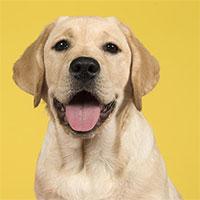 Đây là công thức chính xác nhất để đổi tuổi chó ra tuổi người