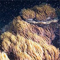"""Phá vỡ sự """"yên tĩnh ma quái"""", sử dụng âm thanh để phục hồi… các rạn san hô chết"""