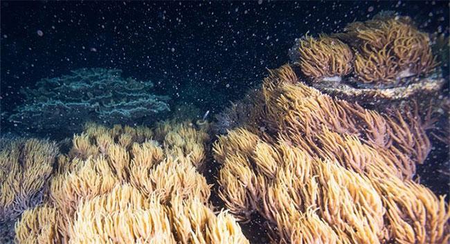 Các nhà khoa học vừa cho biết có một phương pháp mới giúp phục hồi các rạn san hô lớn trên Trái đất.