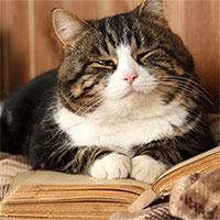 Các nhà khoa học bày cách để chúng ta đoán biết tâm trạng của mèo