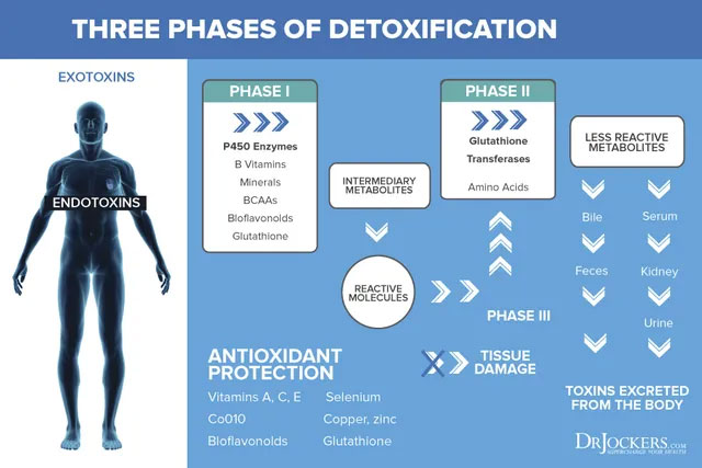 3 giải đoạn thải độc của cơ thể.