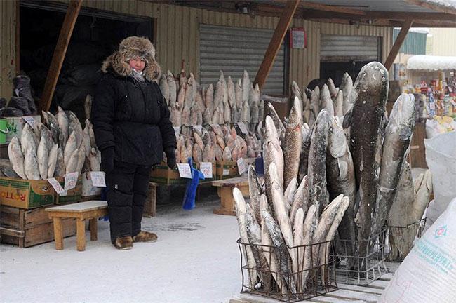 Cá chép là loài cá được ăn nhiều nhất.