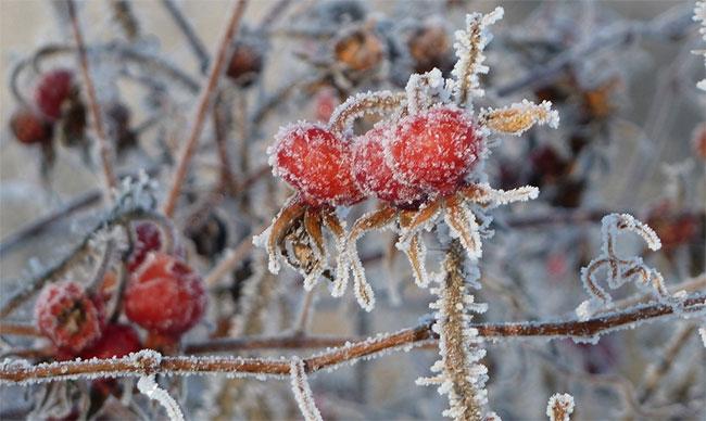 Người dân ở Oymyakon thường không ăn nhiều rau và trái cây.