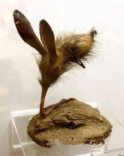 Loài vật này dùng mũi để nâng đỡ cơ thể và di chuyển trong khi chúng hoàn toàn có chân.