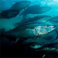 """Đại dương cạn kiệt oxy ở mức kỷ lục, báo động hàng loạt """"vùng chết"""""""