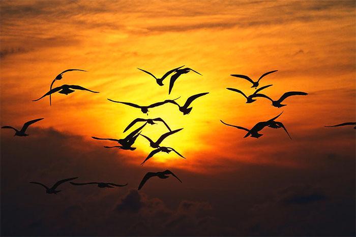 Mỗi năm một lần, ngôi làng nông thôn này lại xảy ra những cái chết kỳ quái của vô số con chim.
