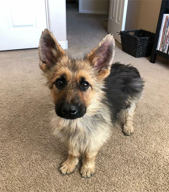 Ranger hiện là một chú chó rất dễ thương, có cuộc sống vô cùng hạnh phúc.