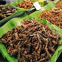 Đã có lúc côn trùng được xem là món ăn hảo hạng trong lịch sử loài người