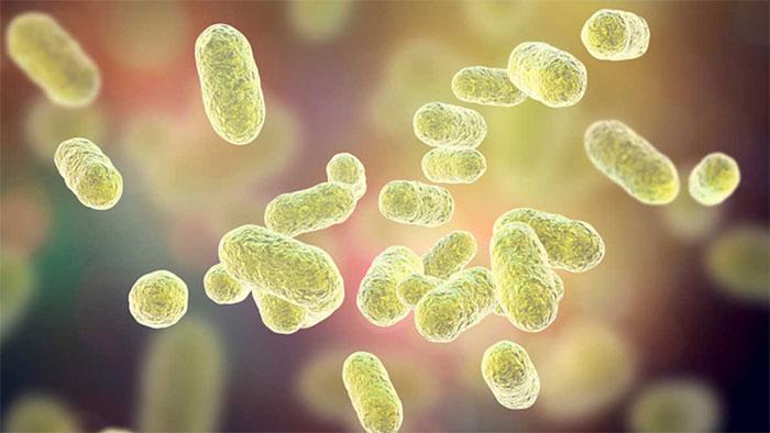 Vi khuẩn Pg tồn tại trong khoang miệng của con người.