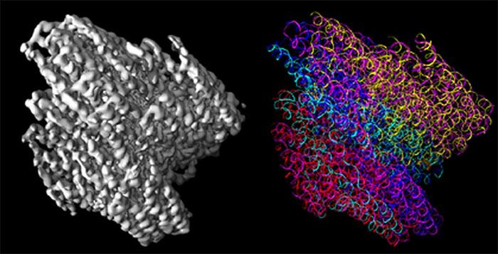 Công nghệ phân tích gene và cơ sở dữ liệu gene