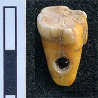 Phát hiện răng người 8.500 năm tuổi dùng làm trang sức