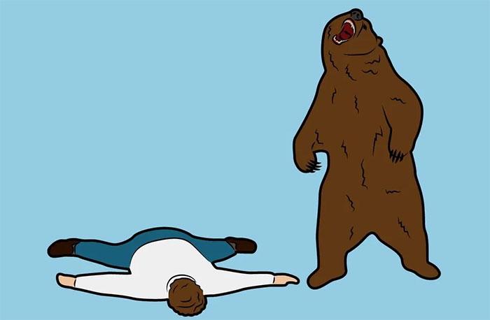 Giả chết khi gặp gấu