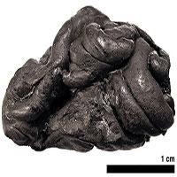 """""""Kẹo cao su"""" thời đồ đá hé lộ cuộc đời cô gái sống 5.700 năm trước"""