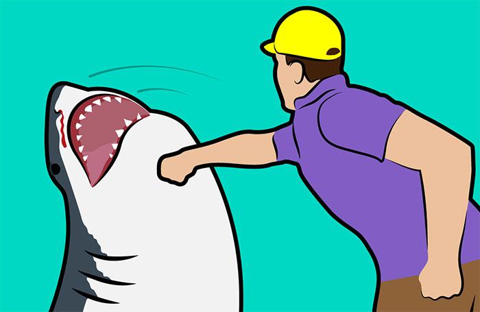 Đánh trúng vào mũi cá mập ở dưới nước là điều rất khó thực hiện.