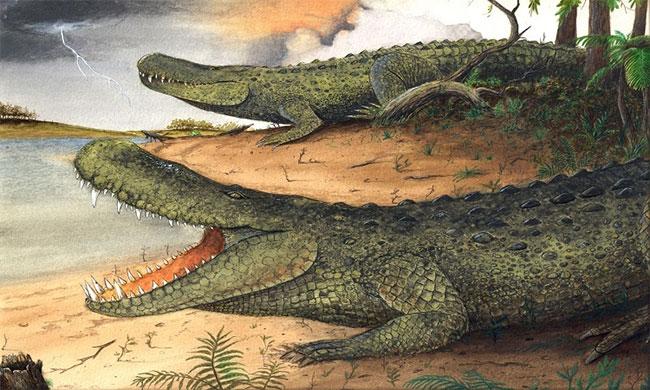 Cá sấu caiman tiền sử nặng ngang voi châu Á ngày nay.