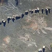 Phát hiện tàn tích khu rừng cổ nhất thế giới