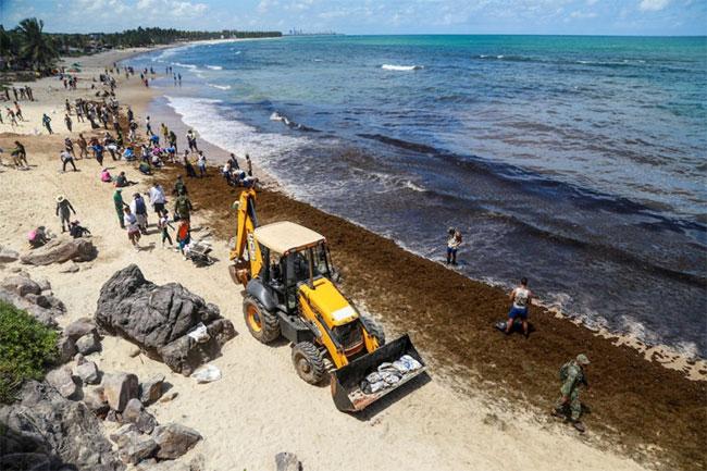 Các chuyên gia cho rằng thảm họa gây ra hậu quả lâu dài cho môi trường.