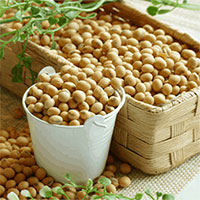 Thực hư chuyện đậu nành ảnh hưởng đến sức khỏe sinh sản