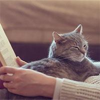 Tại sao mèo thường làm động tác nhào bột?