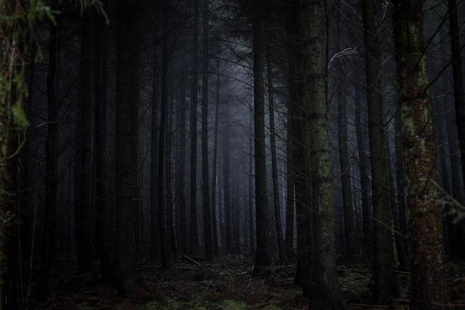 Nói theo cách nào đó, thì vũ trụ bao la ngoài kia cũng hệt như khu rừng này vậy.