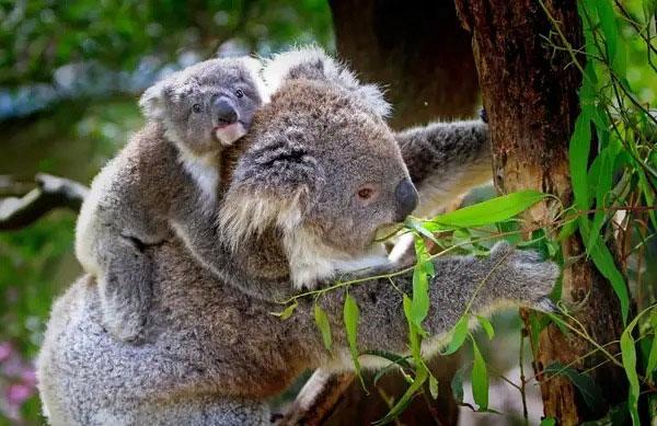 Chúng không phải là loài động vật có tính xã hội và thường ở một mình.