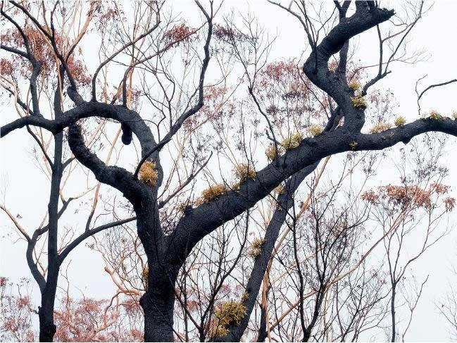 Các khu rừng đang dần hồi sinh.