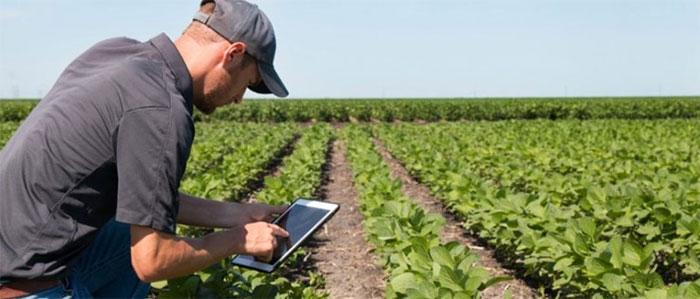 Nông dân đang theo dõi cánh đồng rau thông minh của mình qua phần mềm trên điện thoại.
