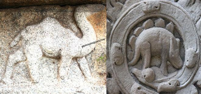 2 sinh vật được tìm thấy tại đền thờ cổ Ấn Độ Vittala.