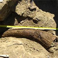 Phát hiện sừng khủng long 33.500 năm tuổi: Phải chăng con người đã sống cùng thời với khủng long?