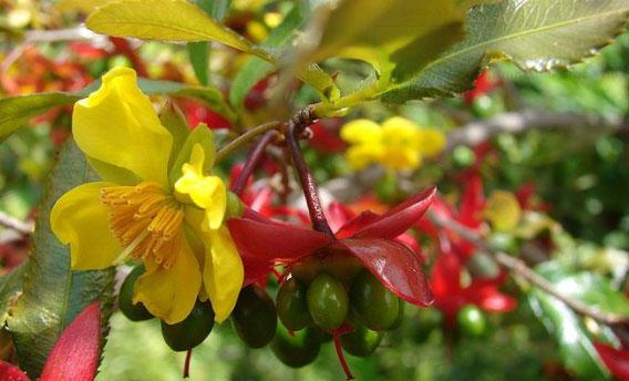 Việc áp dụng kỹ thuật trồng cây đúng sẽ mang lại những bông hoa mai đẹp mắt.