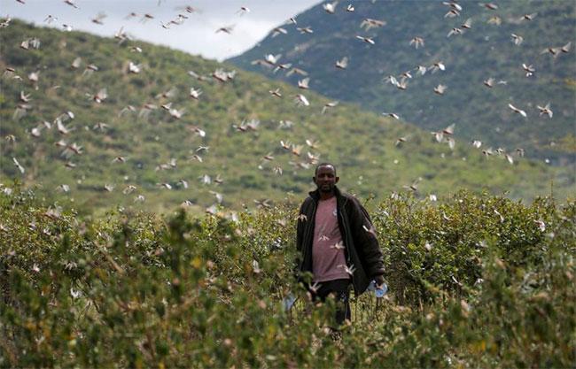 Vùng Laikipia phía bắc Kenya có kế hoạch phun thuốc trừ sâu từ trên không.