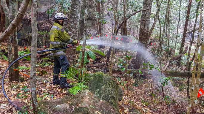 Lính cứu hỏa đã được huy động để thiết lập hệ thống tưới tiêu bảo vệ rừng thông