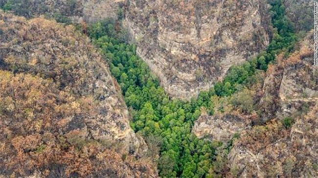 Vị trí của các cây thông được giữ bí mật để ngăn ngừa ô nhiễm.