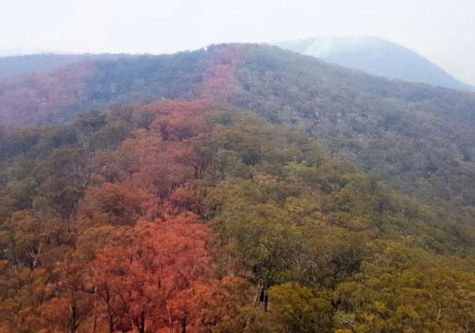 Lính cứu hỏa thả hóa chất để ngăn các đám cháy tại các cánh rừng bên cạnh lan sang số thông Wollemi.