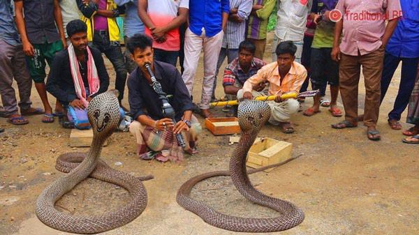 Có khá nhiều người tới nay vẫn bị tò mò bởi tiết mục ảo thuật điều khiển rắn