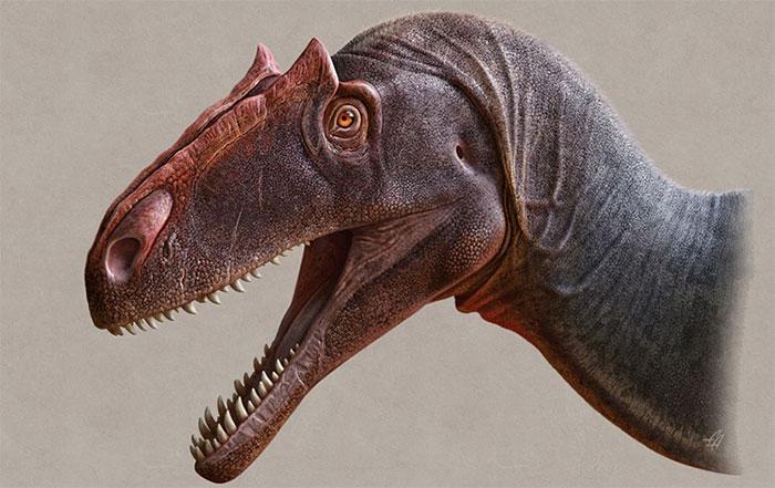 Hình ảnh phục dựng khủng long Allosaurus jimmadseni.