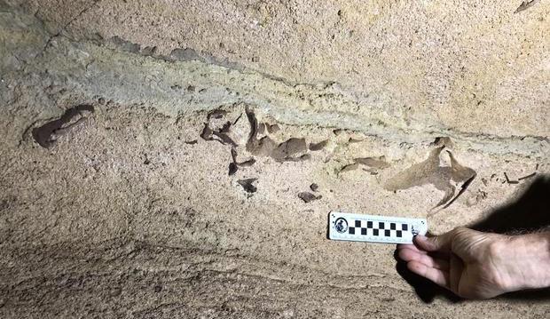 Dựa trên những dấu tích trên vách hang, ông xác định hàm dưới của con cá mập dài 76cm.