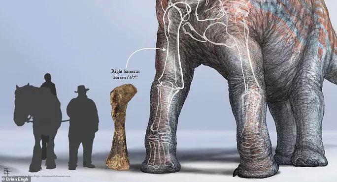 Khúc xương có chiều dài hơn cả chiều cao của người to cao nhất trong đội khảo cổ
