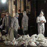 Trung Quốc phát hiện ổ dịch cúm A/H5N1 gần Vũ Hán