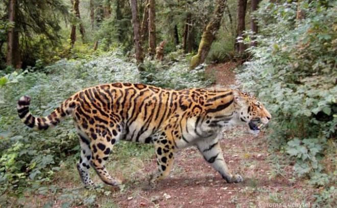 Hổ Longdan