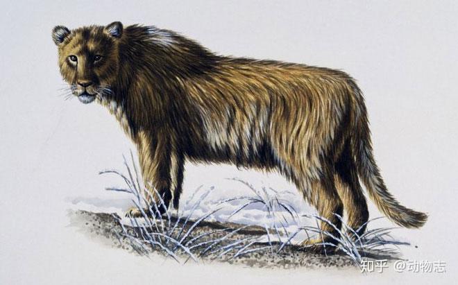 Sinh vật này nên được xếp vào loài sư tử chứ không phải hổ như trước kia.