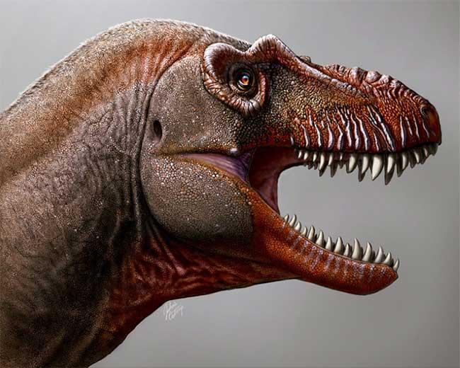 T. degrootorum là động vật săn mồi đỉnh bảng cách đây khoảng 80 triệu năm
