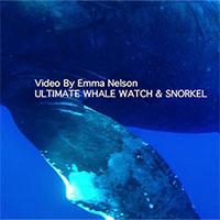 Tận mắt chứng kiến giây phút sinh con của cá voi lưng gù ở ngoài khơi Hawaii