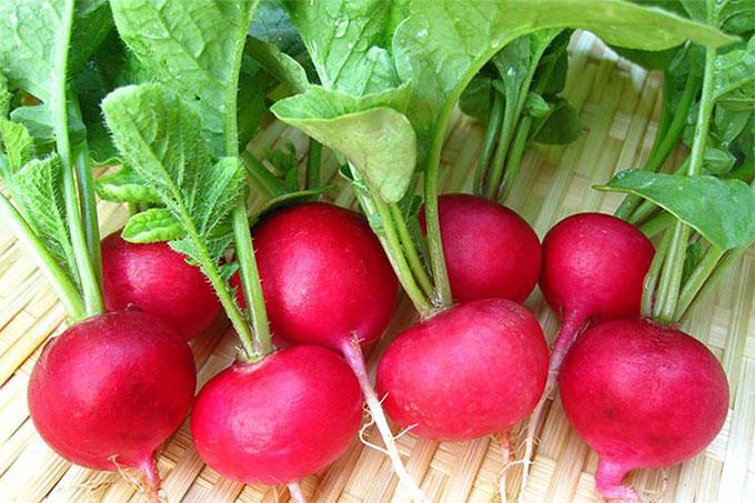Betacyanin trong củ cải đỏ còn có thể giúp cơ thể giải độc tố cực kỳ hữu hiệu