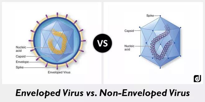 Virus có vỏ bọc như corona (bên trái), virus không có vỏ bọc như bại liệt (bên phải)